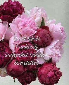 Good Morning, Flowers, Plants, Cards, Pentecost, Buen Dia, Bonjour, Plant, Maps