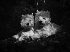 Molly and Lumo