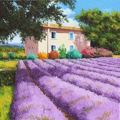 """""""View of  the lavender field"""" 50x50 cm Oil paint , painted with palette knives Jean-Marc Janiaczyk french landscape painter."""