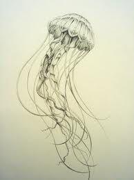 jellyfish illustration - Google Search