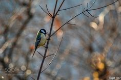 Bird in park by grt107 #animals #animal #pet #pets #animales #animallovers #photooftheday #amazing #picoftheday