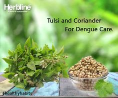 One liter of water boiled with 10-15 tulsi leaves and 10-15 grams dhania (Coriander) powder for ten minutes and cooled to room temperature may be consumed at intervals of 3-4 hours in a day.