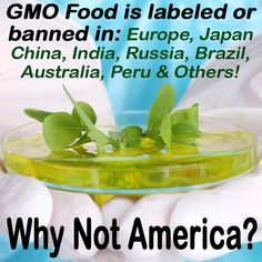 Why aren't GMO's banned or at least labeled in America?? Same reason fluoride is in our water supply and we think it's good for us, and prescription drugs are pushed on us from birth: incredible amounts of money.  If they told us the truth we would make better decisions. Find the truth for yourself. As long as the government allows corporations to put profits before people, they cannot be trusted. #questioneverything
