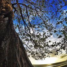 https://www.facebook.com/ExpedicionCR #GoPro #ExpediciónCostaRica #goprophoto #Guanacaste #goproadvanture #GoProLifestyle #goproexpeditions #goprophotography #CostaRica