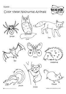 Angol feladatok, mondókák, színezők: Nocturnal animals - Éjszakai állatok