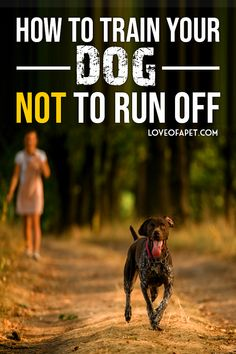 How to Train Your Dog Not to Run Off. Training your dog not to run away is going to be hard and challenging. So if you're wondering what you can do to stop it, then you've come to the right place. Pet Dogs, Dogs And Puppies, Pets, Doggies, Dog Training Techniques, Training Your Dog, Training Tips, Dog Hacks, Service Dogs
