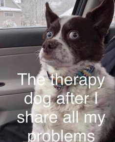 Funny Animal Jokes, Funny Dog Memes, Funny Animal Pictures, Cute Funny Animals, Funny Cute, Really Funny, Funny Photos, Funny Dogs, Funny Animal Sayings