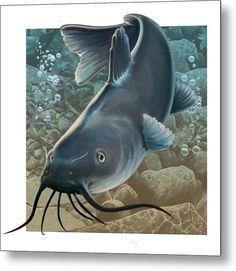 Catfish Canvas Print / Canvas Art by Valer Ian Catfish Images, Catfish Tattoo, Beer Cap Art, Fish Background, Channel Catfish, Fish Artwork, Different Fish, Red Fish, Wildlife Art