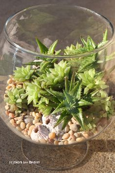 Using a nondraining container isn't a problem if you water infrequently and sparingly. Mounded pebbles on one side of a glass container (from a crafts store) then inserted haworthia and aloe rosettes into the pebbles. I spritz it every now and then to encourage roots to form. ~ I've never tried a container garden with only pebbles. I wonder if they get enough nutrients to grow long term this way.