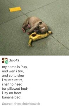 dajo42 my name is Pup, and wen i tire, and so tu slep I muste retire, I haf no need for pillowed hed- I lay on froot. banana bed. Source: theweirdwideweb