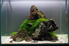 Favourites: minimal tank by zero-fact Another great minimal layout by this Japanese aquascaper. More pictures in his blog site here.