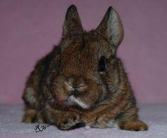 NABÍDKA MIMINEK :: ChS RabbitWorld