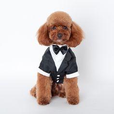 New Pet Dog Puppy Cat Tuxedo Bow Tie Wedding Suit Costumes Coat S-XXL #Affiliate