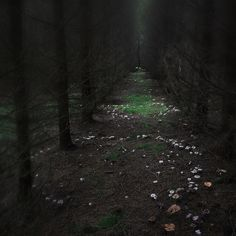 Fairy ring in the woods Nocturne, Fae Aesthetic, Fairy Ring, Mystique, Midsummer Nights Dream, Dark Night, My Tumblr, Story Inspiration, Fantasy World