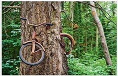 Árvore crescendo em torno de uma bicicleta abandonada