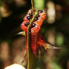 Squash Bugs, Creepy, Creatures, Leaves, Plants, Grubs, Snail, Animals, Nature