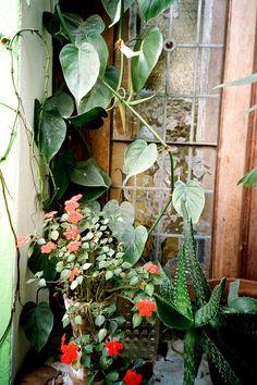 foxontherun:    (via gardens and plants /)