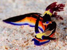 Sea slug  -- I never thought that a slug could be so beautiful!