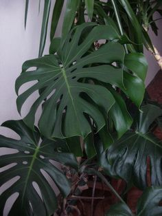Plant Leaves, Projects To Try, Plants, Pictures, Plant, Planets