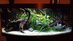 waterdichte aquarium led strips in een mooi ingericht aquarium