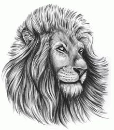 Tribal Lion Tattoo Designs | they saw the whole of the inter: tribal lion tattoo designs