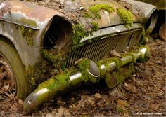 Car Cemetery in Switzerland  (28 pics) - Picture