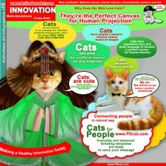 Why do cats rule Web? cats, infographics