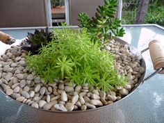 Potted garden- A new use for an old wok
