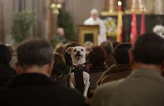 Best Amazing Events in Europe - The blessing of the Animals in Rome. Copyright Catholic News Service Photo.  More on : http://www.europeanbestdestinations.com/top/best-amazing-events-in-europe/ #Travel #ebdestinations #Rome #Dog  #Church #Italy #Roma