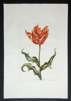 Botanical Drawings, Botanical Illustration, Botanical Prints, Tulip Drawing, Magnolias, Food Coloring, Color Mixing, Tulips, Inspire