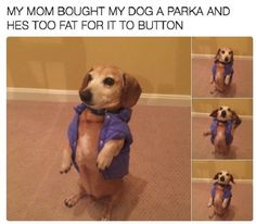 Dogs are a meme's best friend – 30 Pics