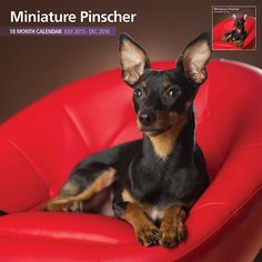 Miniature Pinscher 2016 18 Month Calendar, 13 wonderful images and even clearer grids and texts. This is usable from July 2015 until the end of December 2016. Perfect for Min Pin lovers. This Miniature Pinscher calendar has been through a careful selection process to ensure that we have the best possible images of the Miniature Pinscher. | eBay!