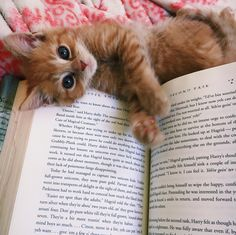 I think I found a new reading buddy http://ift.tt/2EwEbSM