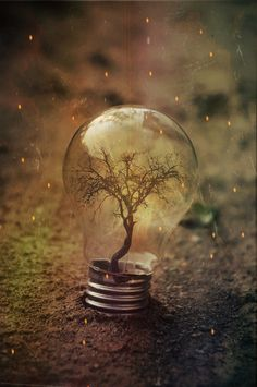 Plant in a light bulb