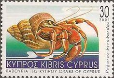 Common Marine Hermit Crab (Pagurus bernhardus)