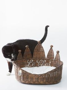 Riviera Maison-I don't even have a cat but I love this! Crazy Cat Lady, Crazy Cats, Rivera Maison, Word Cat, Cat Dog, Mundo Animal, Animal Party, Party Animals, Cute Animal Pictures