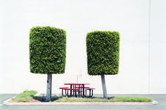 Topiaries with Lunch Table | From a unique collection of color photography at https://www.1stdibs.com/art/photography/color-photography/