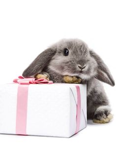 Cute bunny with present