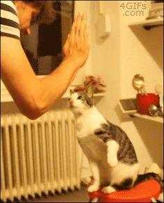 i love this cat hahahaha :''D