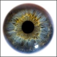 eye.jpeg (600×602)