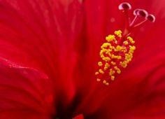 Pollination with precision: How flowers do it