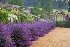 Awesome garden!