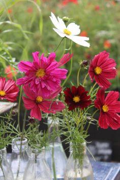 Garden Visit: A Factory Yard at Emma Bridgewater in Stoke-on-Trent | Gardenista | Bloglovin'