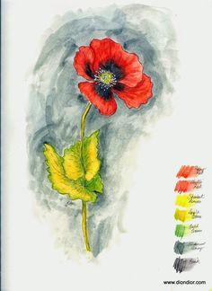 Dion Dior: Tutorial & Giveaway: Watercolor Pencil Poppy
