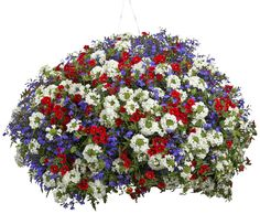 A really nice Proven Winners basket idea...Red Superbells, Blue Lobelia, and White Verbena.  We may try this one next year at the orchard.