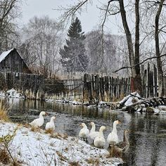 Photos and Videos Country Life, Country Roads, Winter Szenen, Mundo Animal, Farm Yard, Winter Photography, Landscape Photos, Farm Life, Cities