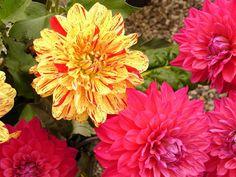 Most Beautiful Perennial Flowers
