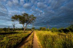 Photograph by Ross Couper Virtual Games, Wildlife, Photograph, Country Roads, Landscape, Photography, Fotografie, Fotografia