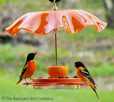After seeing my first up close and personal oriole, I am getting ready to put out my first oriole feeder.  Looks nothing like this but I bet hubby could design the base, now I just need to find the umbrella.  :)
