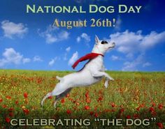 Take your dog for a nice long walk in celebration! - ED